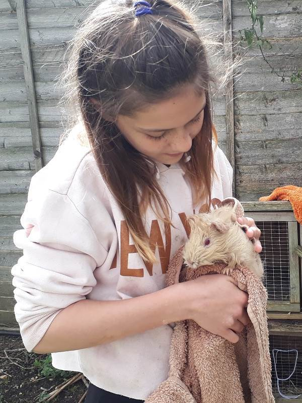 a petting zoo where children can meet rabbits, chickens and guinea pigs at Orleans school in Twickenham